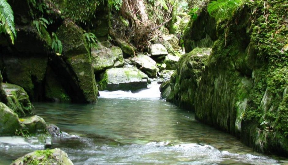 Brook Stream; Get Involved