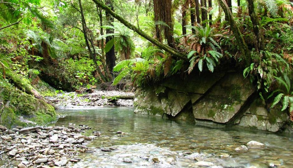 Brook Stream; Brook Waimārama Sanctuary Foundation; Brook Sanctuary; Stream;