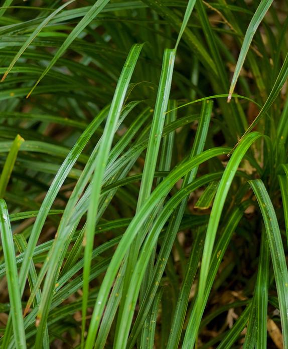 Kiekie; plants; wildlife; Brook Sanctuary
